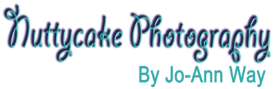 nuttycake logo-S